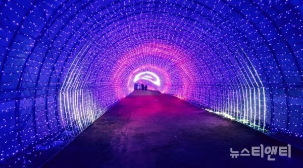 코리아플라워파크 빛축제 / 네이처농업회사법인 제공